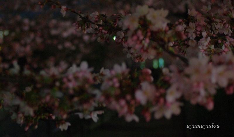 桜 昨日・今日・明日_a0157263_22544697.jpg