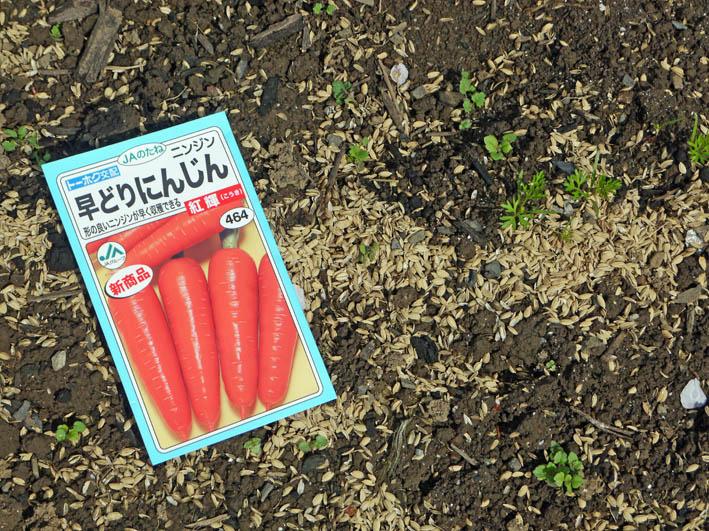 根っ子の長い早世タマネギ初収穫とオクラの種蒔き4・6_c0014967_18451776.jpg