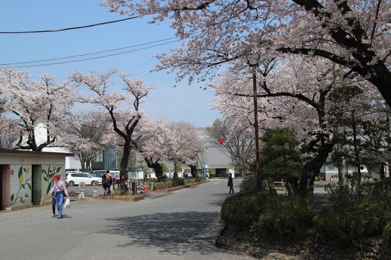 桜_c0122967_16413617.jpg