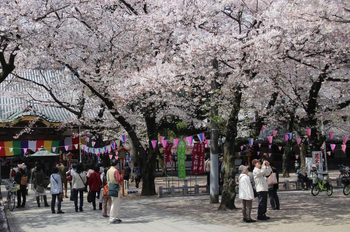 桜_c0122967_16442418.jpg