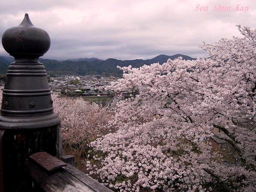 今、京都は桜が満開 2016年4月6日_a0164068_2044617.jpg