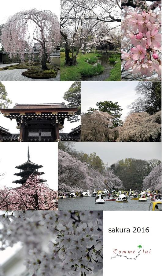 桜コレクション_a0192475_910692.jpg