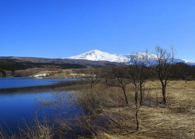 加速し始めた~3  鳥海山麓 ・冬師(トオシ)湿原 その2_a0214206_01081468.jpg