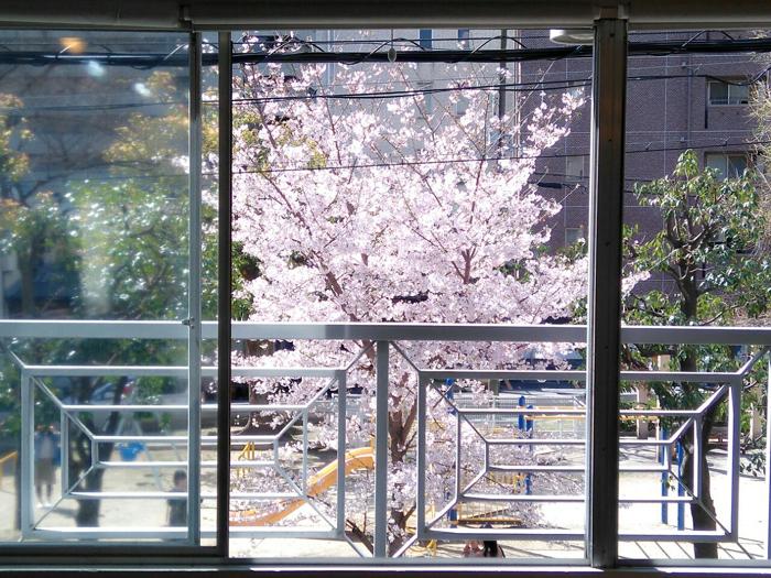 公園の桜_e0069308_12175167.jpg