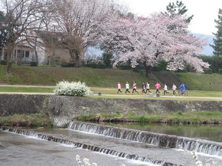 16桜だより39 鴨川満開_e0048413_15384546.jpg