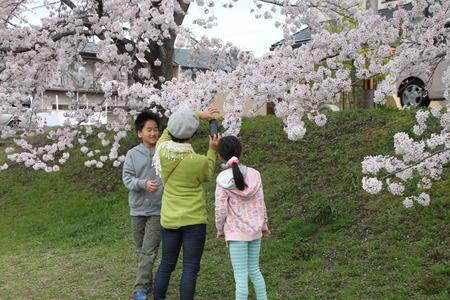 16桜だより39 鴨川満開_e0048413_15401682.jpg