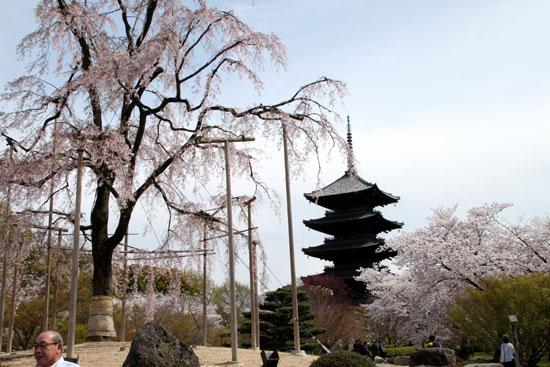 16桜だより40 東寺五重塔と桜_e0048413_16215550.jpg