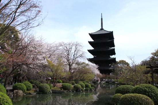 16桜だより40 東寺五重塔と桜_e0048413_16221033.jpg
