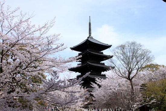 16桜だより40 東寺五重塔と桜_e0048413_16222773.jpg