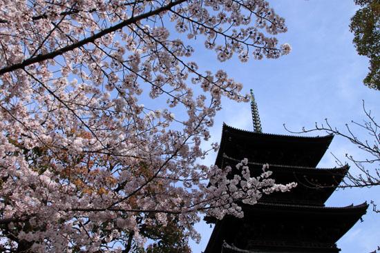 16桜だより40 東寺五重塔と桜_e0048413_16224074.jpg