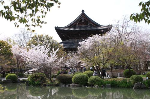 16桜だより40 東寺五重塔と桜_e0048413_1623238.jpg