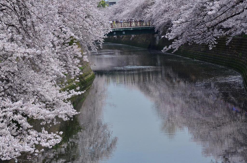 大岡川 サクラタム9_d0065116_21184888.jpg