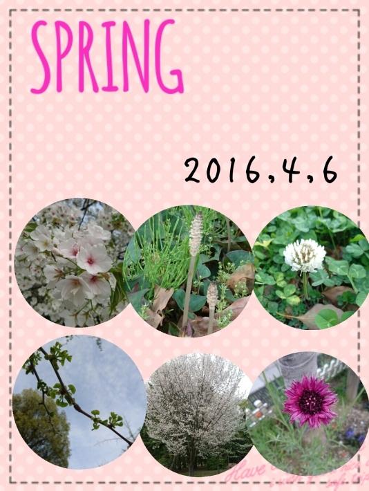 4月  SPRING_f0068517_09482388.jpg