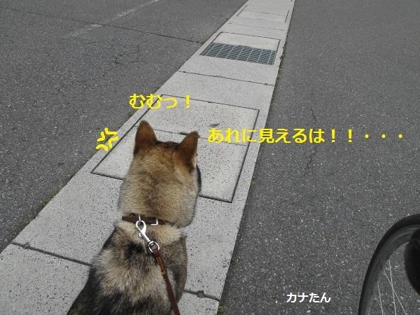 f0143123_09051487.jpg