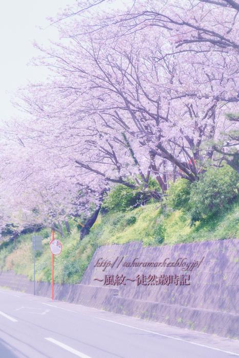 カーブミラーと桜坂。_f0235723_2125367.jpg