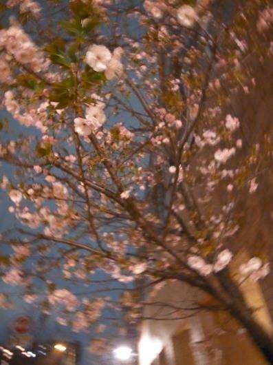 桜満開_b0310424_21003517.jpg
