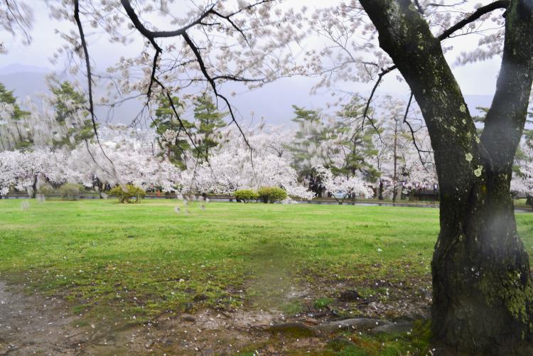 雨の城山公園_d0265224_19543423.jpg