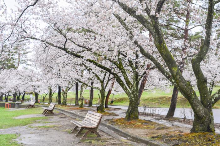 雨の城山公園_d0265224_19544162.jpg