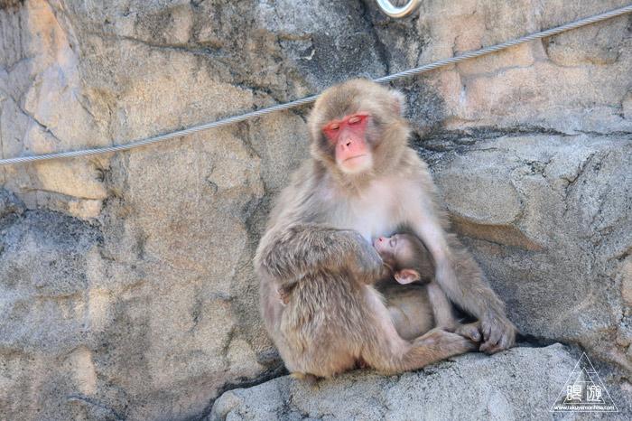 413 旭山動物園 ~家族で動物園~_c0211532_22472452.jpg