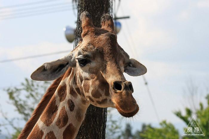 413 旭山動物園 ~家族で動物園~_c0211532_2250343.jpg
