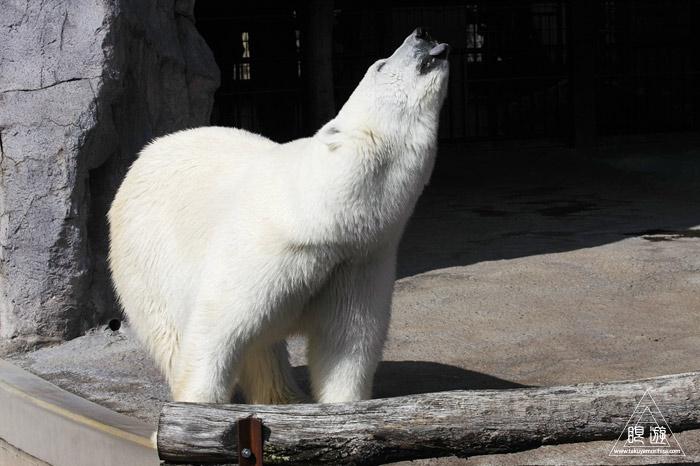 413 旭山動物園 ~家族で動物園~_c0211532_2342168.jpg