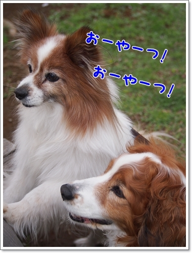 d0013149_00110081.jpg