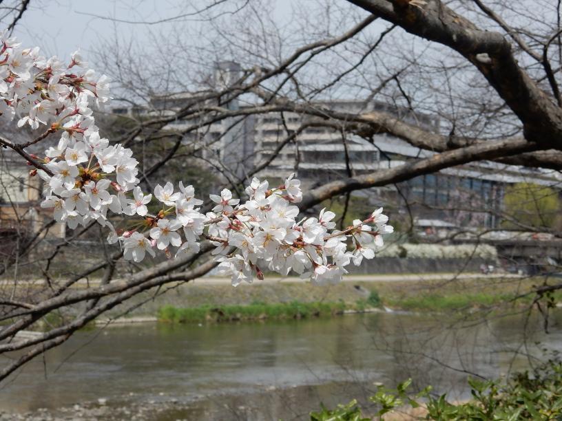 イースター(復活祭)休暇中の京都、大阪はにぎわってました_b0235153_1043044.jpg