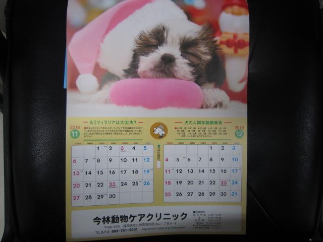 【狂犬病の時期になりました】_b0059154_1258048.jpg