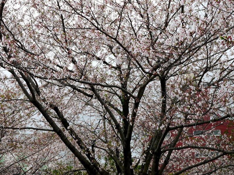 和歌山便り_b0093754_17371129.jpg