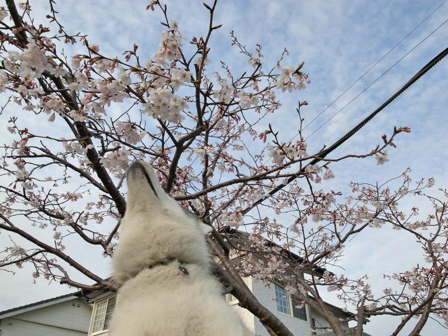 春の嵐 (^_^;)_c0049299_2331090.jpg