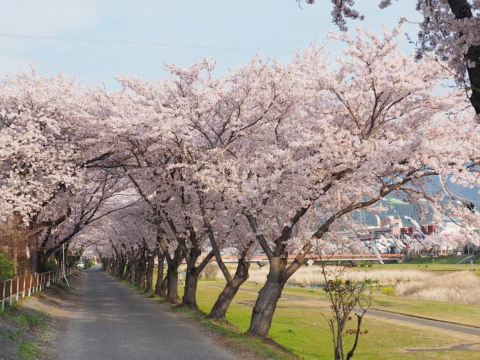 「相川公園 桜」の画像検索結果