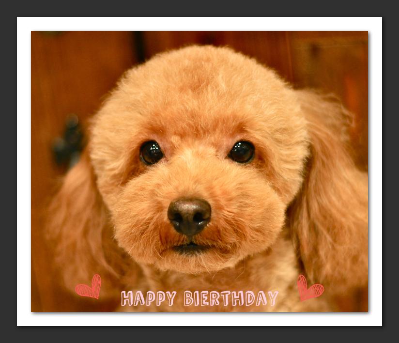 Happy Birthday フィービーちゃん♡_d0060413_2016582.jpg