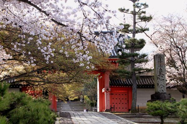 2016桜だより41 真如堂_e0048413_18143972.jpg