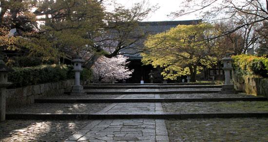 2016桜だより41 真如堂_e0048413_18145310.jpg