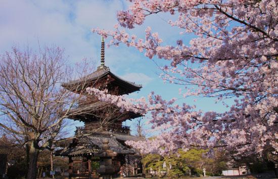 2016桜だより41 真如堂_e0048413_18151836.jpg