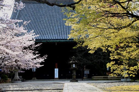 2016桜だより41 真如堂_e0048413_1815640.jpg