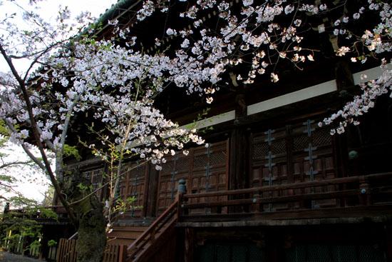 2016桜だより41 真如堂_e0048413_1817017.jpg