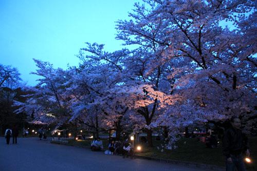 16さくら便り43 京都府立植物園ライトアップ_e0048413_20524543.jpg