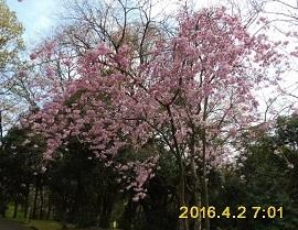 家族でお花見_a0177314_23244228.jpg