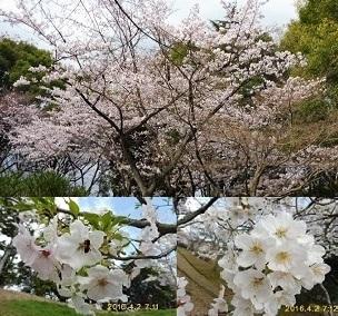 家族でお花見_a0177314_23304746.jpg