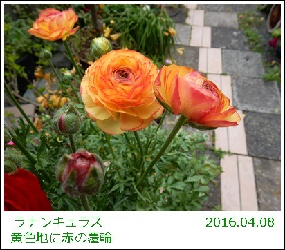 e0033229_1934328.jpg