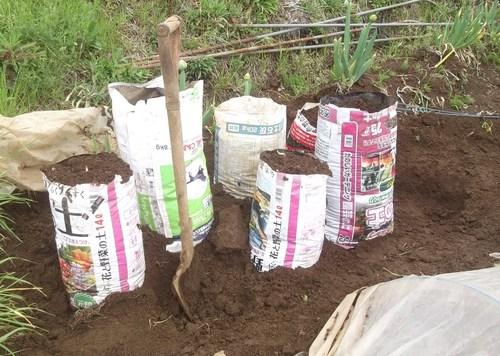長芋の袋栽培_b0137932_2241615.jpg