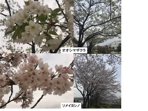 b0136535_19313550.jpg