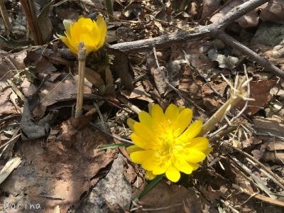 春一番のキトウシ山~東川_e0326953_6561181.jpg