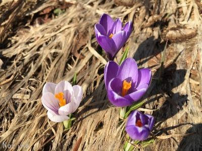 春一番のキトウシ山~東川_e0326953_763459.jpg