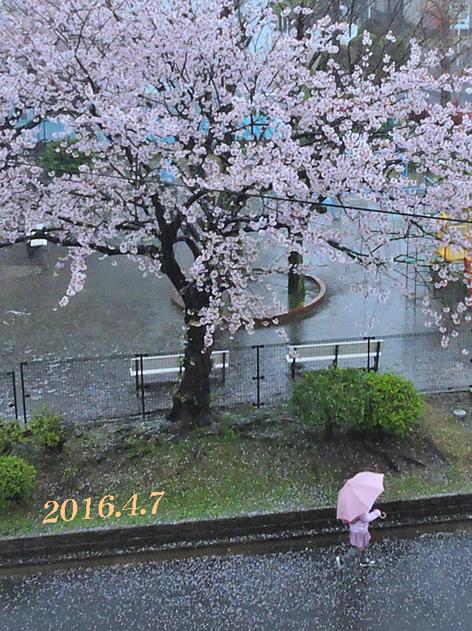 春の嵐一過 : 写愛館
