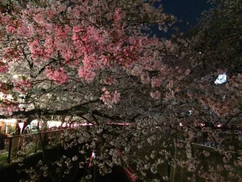 ピンクがきれいな〜_c0151965_13203431.jpg
