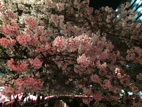 ピンクがきれいな〜_c0151965_13203486.jpg
