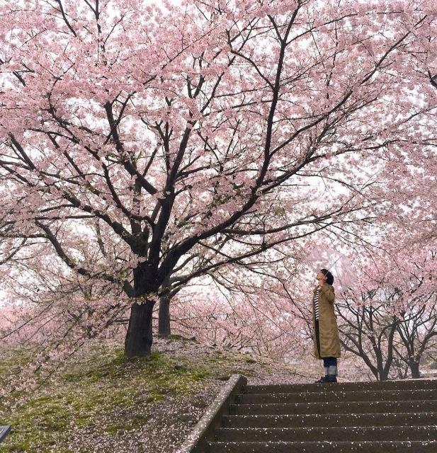 雨の桜_b0183681_00561330.jpeg