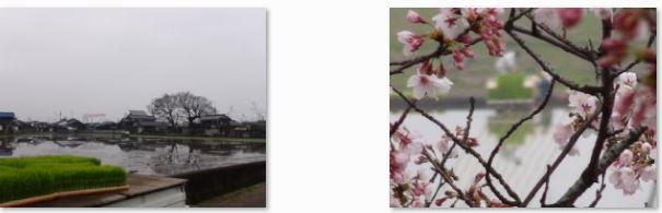 西条市の田植の状況…2016/4/7_f0231709_19387.jpg